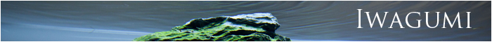 minibanner Iwagumi just aquascaping