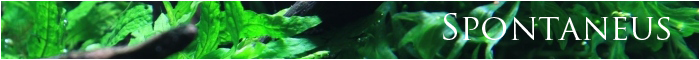 minibanner spontaneus just aquascaping