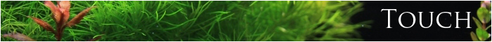 minibanner touch just aquascaping