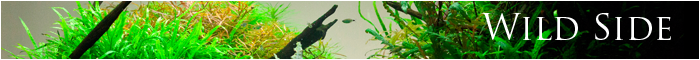 minibanner wild side just aquascaping